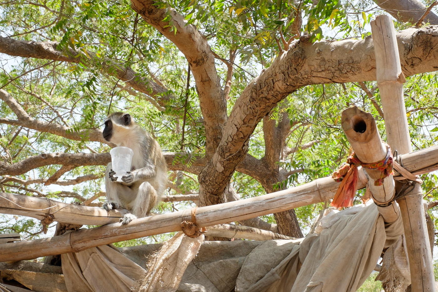 The Gambia-6
